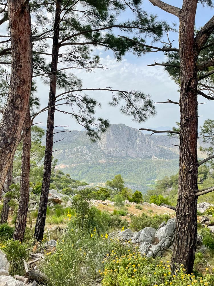 Forest hike in Antalya
