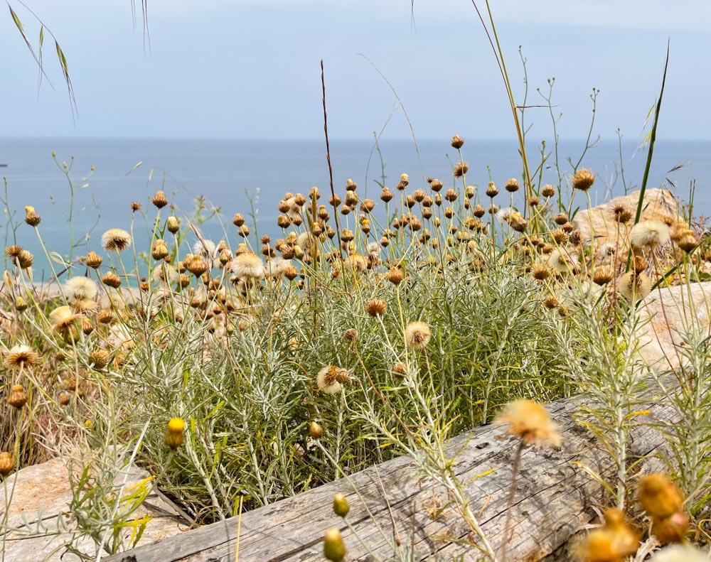 Wild flowers in the mountains near Antalya